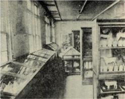 標本室(昭和4年整備)